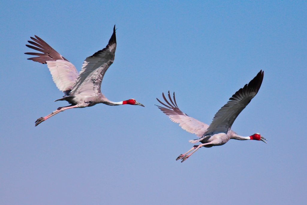 Hystory of Bharatpur Bird Sanctuary hindi, History of Keoladeo National park hindi, bharatpur bird sanctuary history, bharatpur history, bharatpur park history, Bharatpur pakshi Udyan ka itihas, bharatpur ka itihas, keoladeo park ka itihas